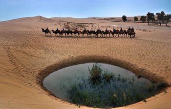 【库尔勒市出发】罗布人村寨、塔克拉玛干沙漠、塔里木河等纯玩1日跟团游*探访神秘的长寿部落-美团