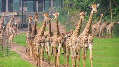 【夷陵区】三峡森林野生动物世界-美团