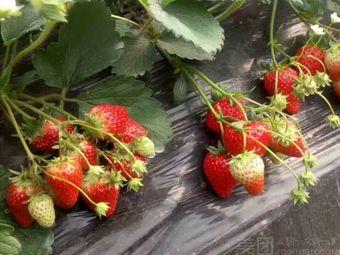 生态草莓采摘园