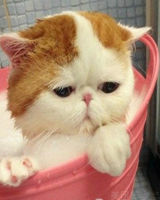 毛孩子宠物生活馆-美团