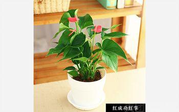【北京等】绿韵花艺-美团