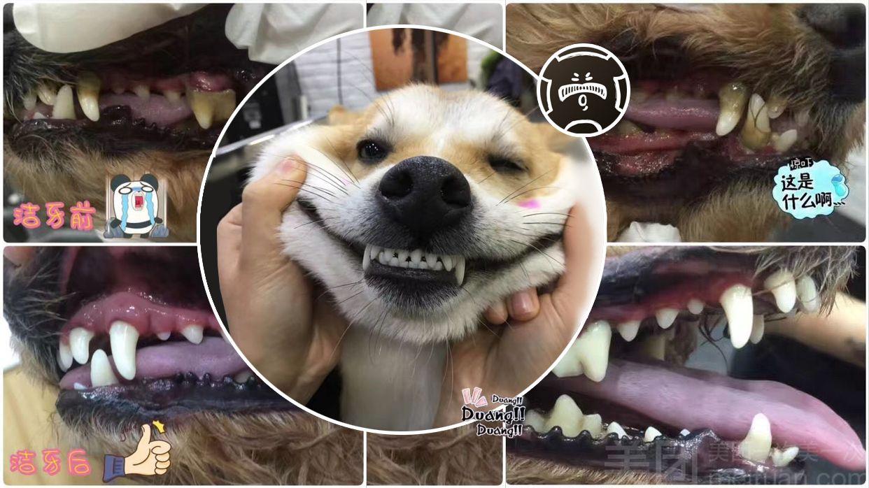 宠宠熊宠物美容(康桥店)-美团