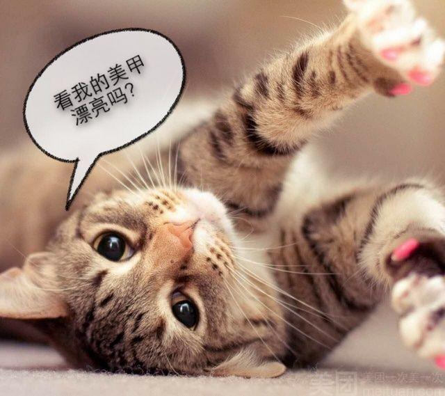美甲小猫动物手绘图片