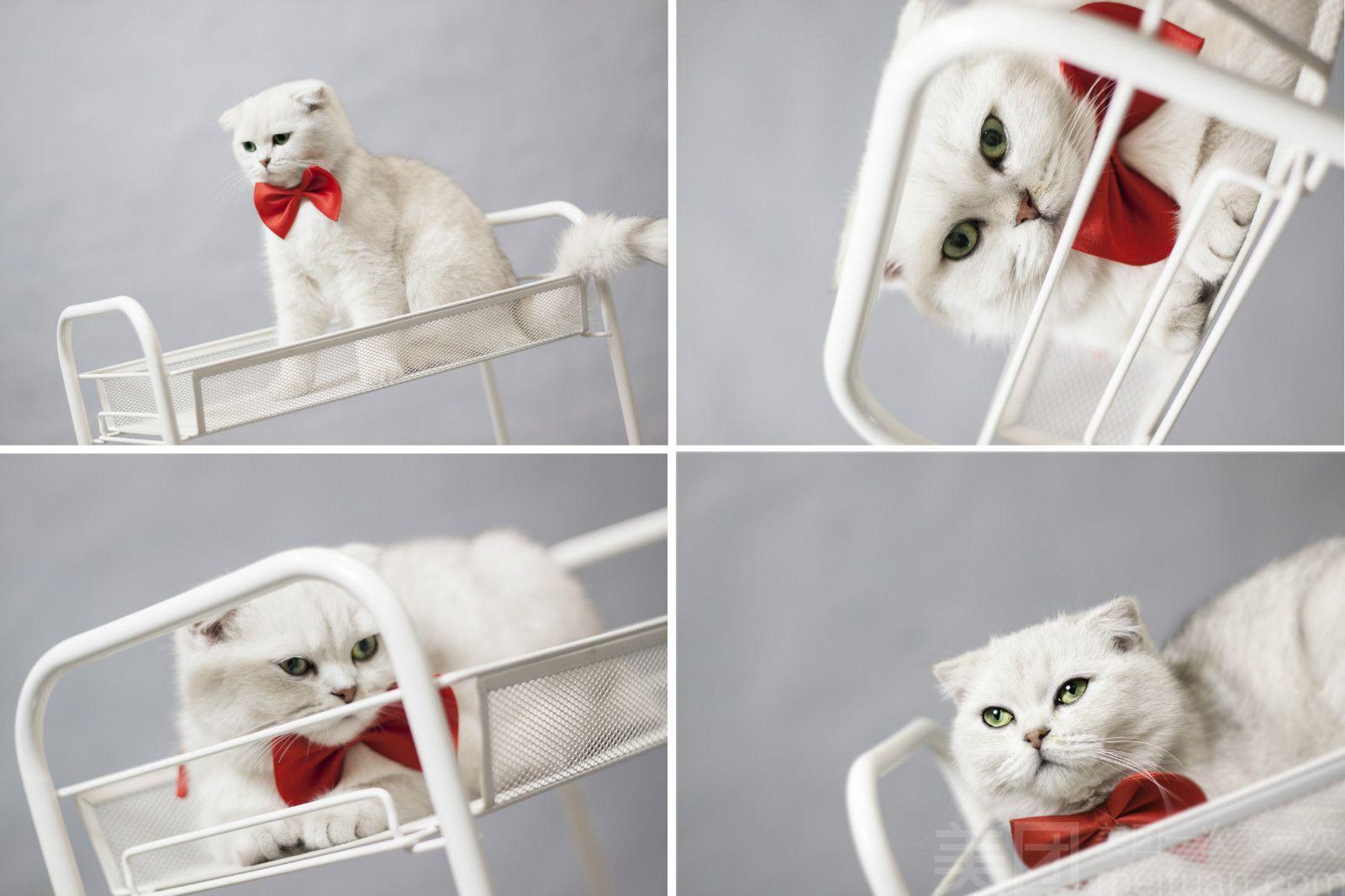 CatTree猫树摄影(百盛购物广场店)-美团