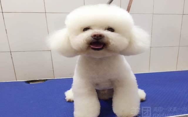 狗狗生活宠物(广州雅居乐花园店)-美团