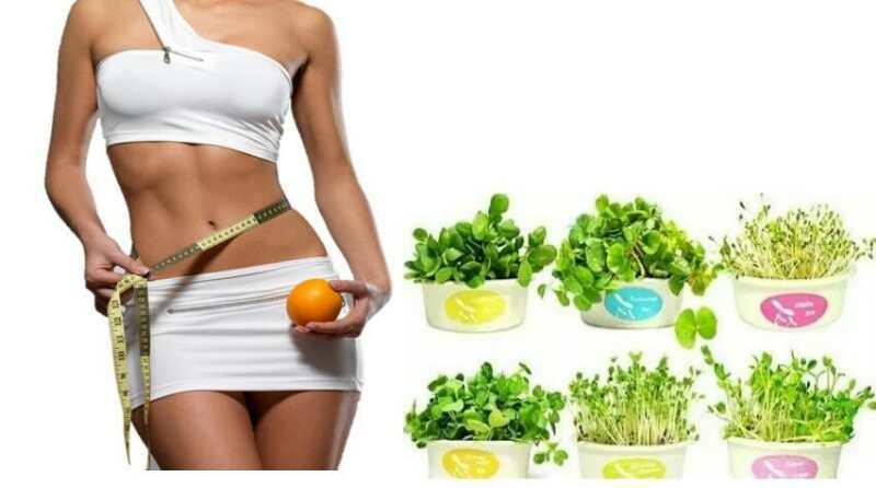食疗减肥-美团