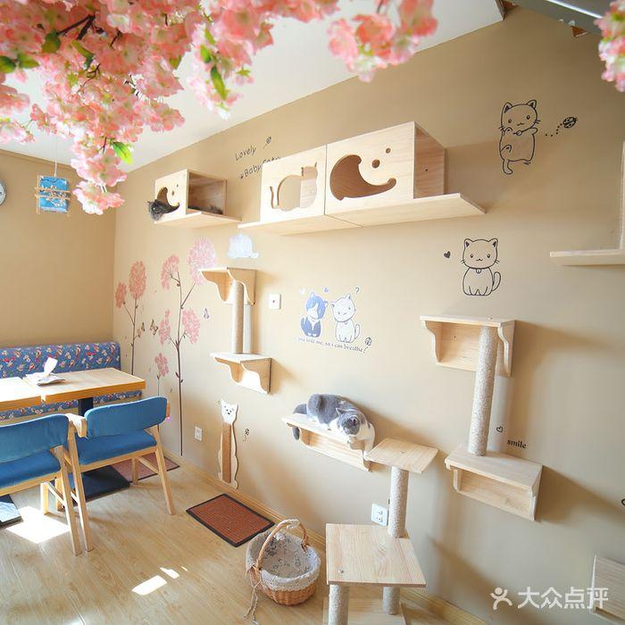 cc猫咖·猫咪咖啡馆·名猫生活馆