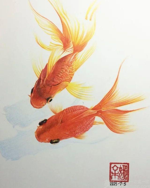 绘画鱼的动物结构