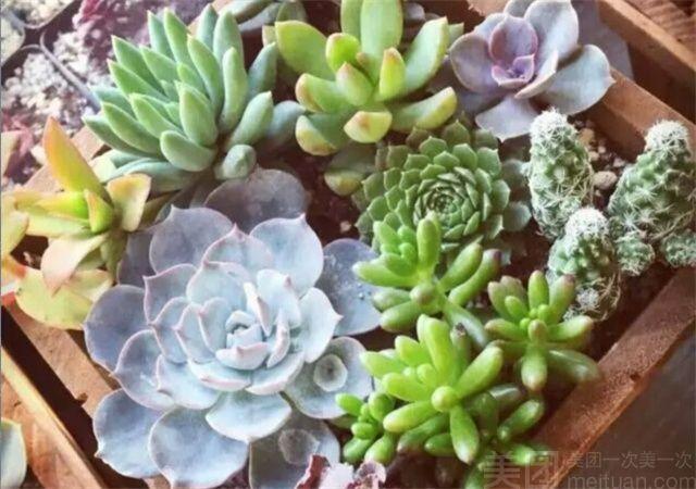 禾禾微物微景观DIY-美团