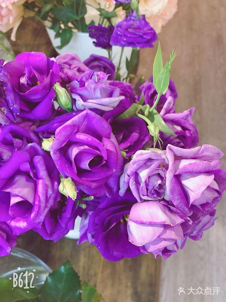 紫色洋桔梗