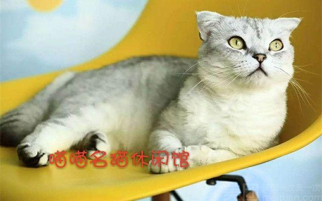 喵喵名猫休闲吧(喵喵名猫咖啡馆)-美团