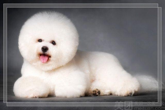 酷狗宠物会所-美团