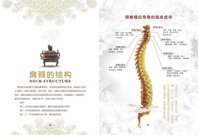 肩颈的结构