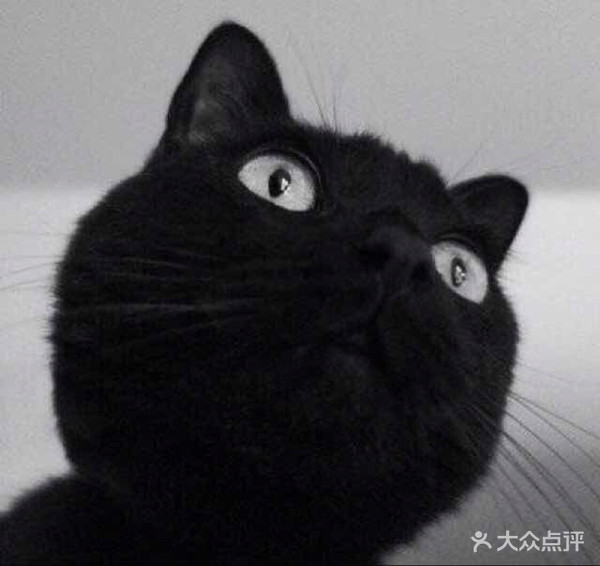 猫狗情侣头像