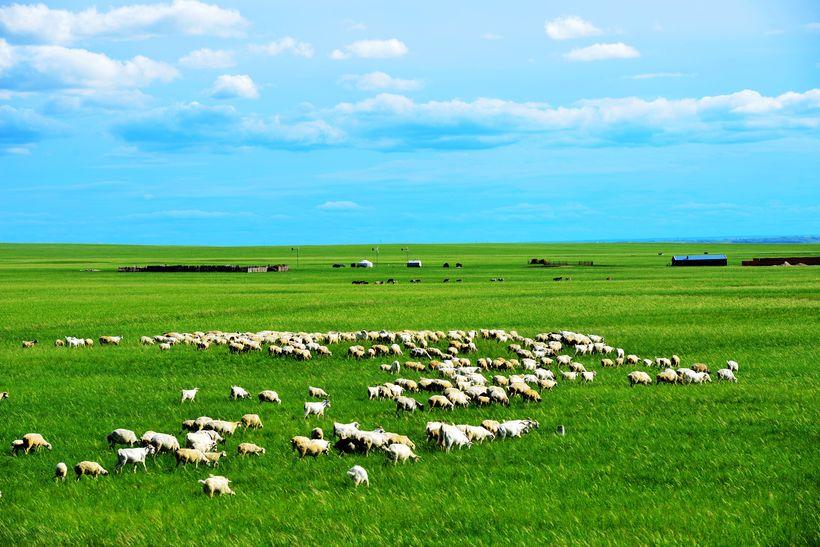 草原大象牛羊图片_草原牛羊简笔画_草原牛羊简笔画