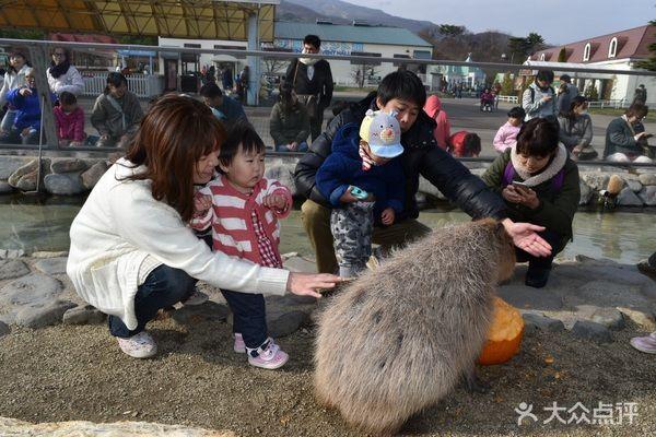 亲子游的新乐趣,一起去和小动物玩耍吧!