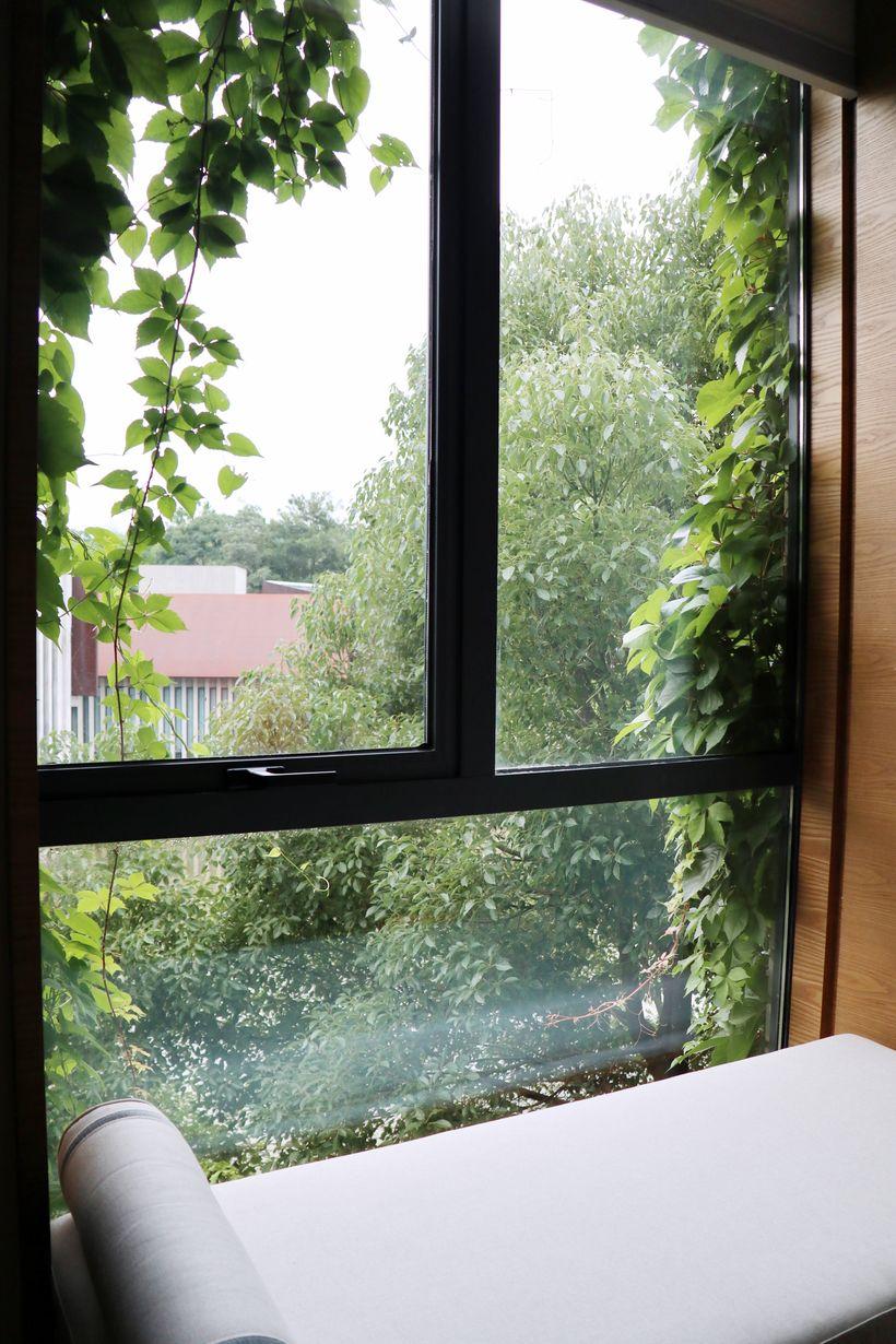 酒店三楼的房间景观比较好 通过窗户就能看到外面的风景 绿叶伸缩到窗