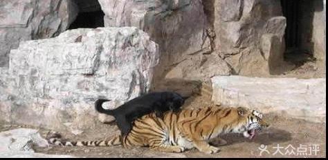 动物园最强偷拍(兽性其实也和人一样简单)