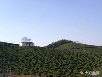 景岗山茶叶生态园