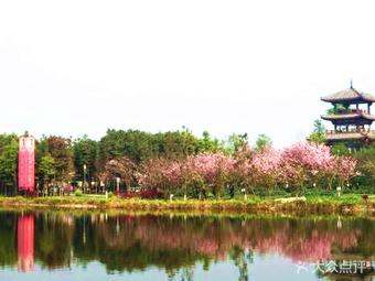 青白江樱花节