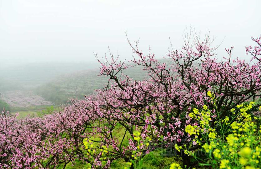 【桃花谷红色风景区】汝州市连锁大全,点击查看全部1
