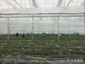 桂峰台农种植园