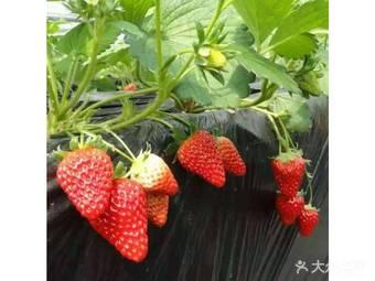 权有农场户外烧烤·时令水果采摘