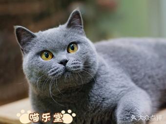 喵乐堂CFA猫舍
