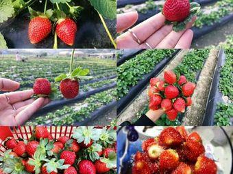 圭峰山草莓园