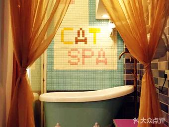 麒麟宠物猫舍spa洗澡美容寄养酒店(普陀长寿路店)