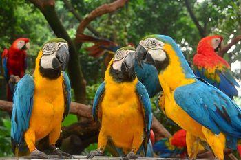 【其它】长隆飞鸟乐园特定日门票+长隆野生动物世界特定日门票(成人票)-美团