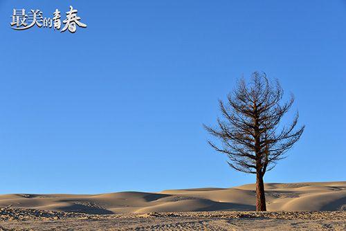"""《最美的青春》实时收视破2.8 ,""""功勋树"""" """"点亮""""荒漠绿光"""