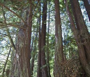 Purisima Creek Redwoods