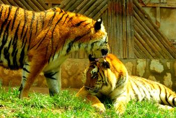 【盘龙区】云南野生动物园门票(儿童票)-美团