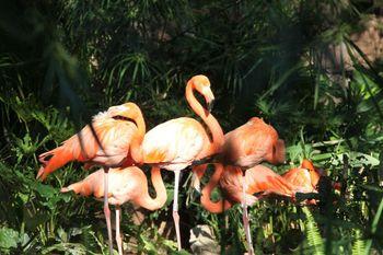 【广州出发】长鹿休闲度假农庄纯玩1日跟团游*动物园+120游乐金-美团