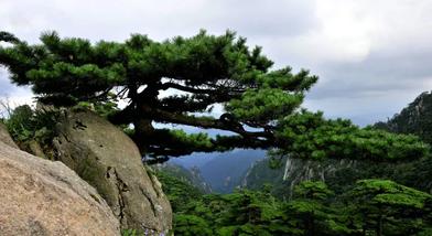 【全国】黄山风景区旺季门票成人票+智能中文语音讲解-美团