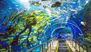 【航天桥】太平洋海底世界亲子门票 - 2大1小票-美团