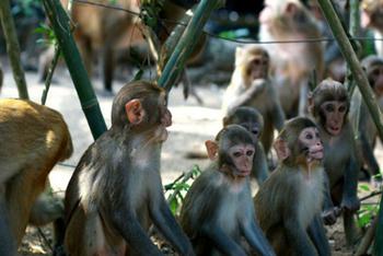 【三亚出发】南湾猴岛景区、椰田古寨1日跟团游*包含门票+索道+接送-美团