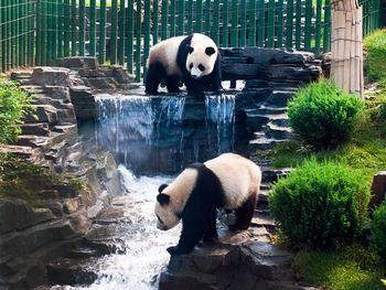 【丹东出发】大连森林动物园、圣亚海洋世界纯玩2日跟团游*森林动物园、圣亚2日-美团