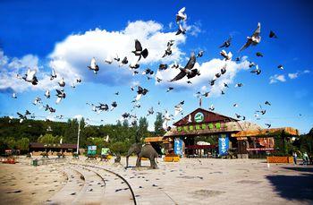 【沈阳出发】沈阳森林动物园1日跟团游*全家一起看动物合家欢-美团