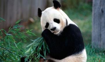 【沧州出发】北京动物园、太平洋海底世界、北京天安门纯玩2日跟团游*晚出发观升旗-美团