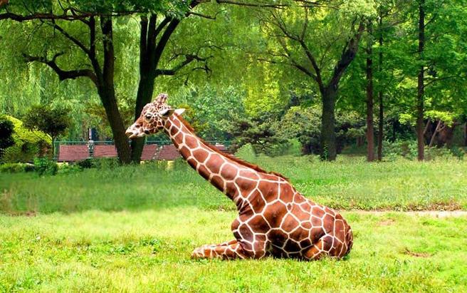 上海动物园-美团