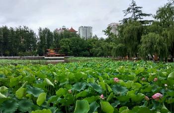 【翠湖公园】(不含景区大门票)昆明翠湖公园地图定位自动中文讲解-美团