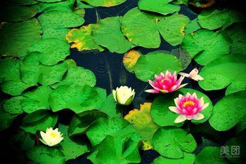 【滕州市】微山湖湿地红荷风景区门票+船票成人票-美团