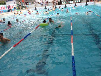 金环飞鱼游泳俱乐部