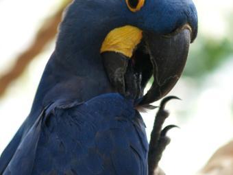 国家鸟类公园