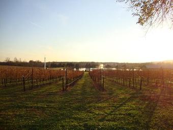 Old House Vineyards