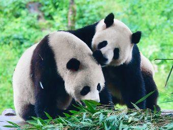 栾川竹海野生动物园