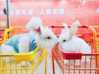 贵阳安哥拉巨兔体验馆(总店)