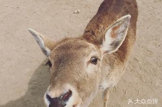 南海子麋鹿苑博物馆
